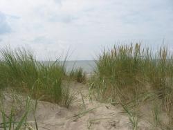 Dünenlandschaft in Norddeich