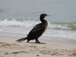 Natur pur im Ferienhausurlaub an der Ostsee
