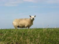 Natur pur im Schleswig Holstein-Urlaub im Ferienhaus