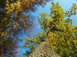 Natur pur im Spreewald
