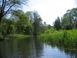 Moor- und Auenlandschaft im Spreewald