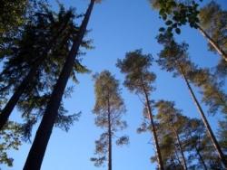 Wandern im Thüringer Wald, z.B. am Rennsteig