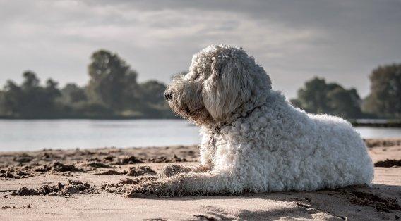Urlaub mit Hund in Ungarn