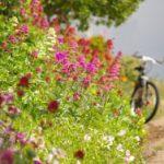 Radurlaub – zum Bergradeln in die Kitzbüheler Alpen