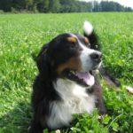 Urlaub mit Hund: Große Auswahl an Ferienhäuser und Ferienwohnungen