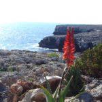 Urlaub auf Mallorca und den anderen Baleareninseln