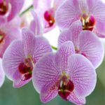 Urlaub für Blumenfans: Insel Mainau und Keukenhof