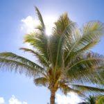 Goldene Palme für die besten Reisen des Jahres 2010