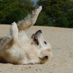 """""""Hundeliebling"""" Ahrenshoop – natürlicher Urlaub mit Hund"""