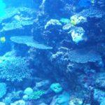 Tauchreisen in Cinque Terre