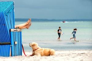 Urlaub mit Hund in Damp an der Ostseeküste