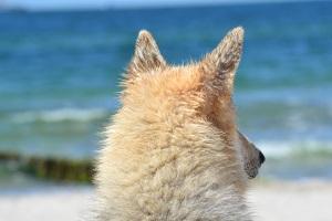 Urlaub mit Hund in Dierhagen