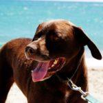 """""""Hundeliebling"""" an der Ostseeküste: Tierischer Urlaub in Wismar"""