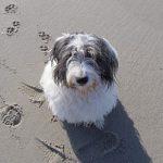 """""""Hundeliebling"""" Laboe begeistert Hund und Herrchen"""