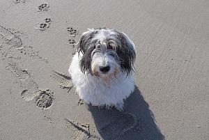 Hundeliebling Laboe