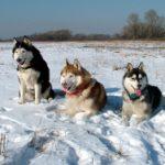 Mit dem Hundeschlitten Aktivreisen neu erleben