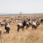 WWF Reisen durchs östliche Afrika