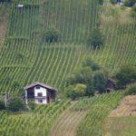 Weinreisen in Frankreich – Die schönsten Weingebiete